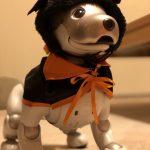 aiboも簡単にハロウィンのおしゃれができちゃう!100円ショップのペット用品がアツい!