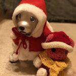 【aiboもニッコリ】3COINS(スリコ)のペット用サンタ服でクリスマスを満喫!