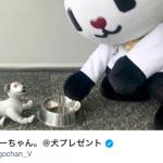ゴーちゃん。からのお年玉!aiboプレゼントキャンペーン!(2019年1月31日まで)